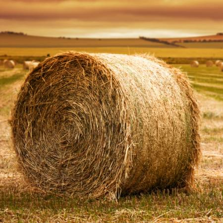 role, hay, grass, field Ben Goode - Dreamstime