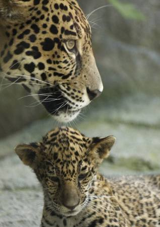 animal, animals, baby, zoo Jxpfeer - Dreamstime