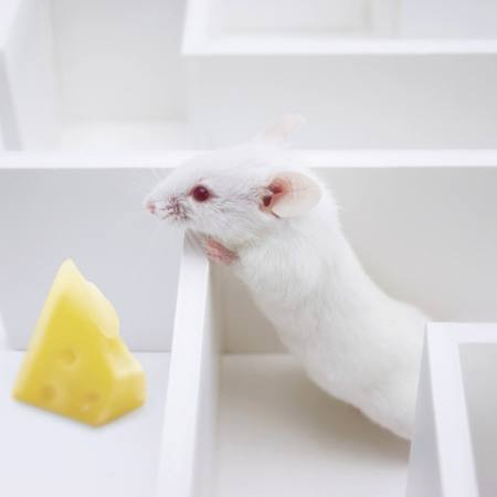 mouse, mice, cheese, labyrinth Juan Manuel Ordonez - Dreamstime