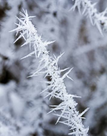 frost, ice, winter, spike Haraldmuc - Dreamstime
