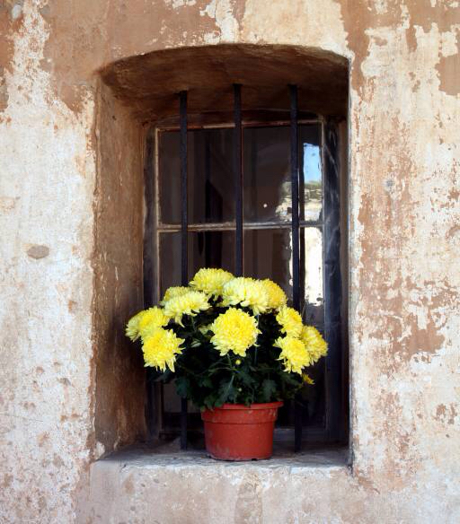 flowers, flower, window, yellow, wall Elifranssens
