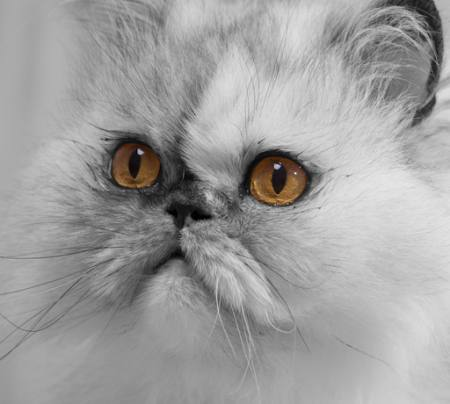 cat, animal Andym68 - Dreamstime