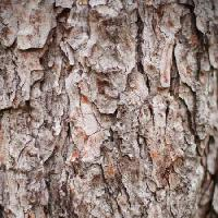 Pixwords The image with tree, nature, object, bark Oleg Pilipchuk - Dreamstime