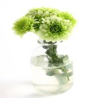 Pixwords The image with plant, flower, green, water, tube, vase Kerstin Aust - Dreamstime
