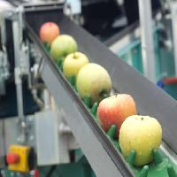 Pixwords The image with apples, food, machine, factory Jevtic
