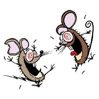 Pixwords The image with mouse, mice, insane, happy, two Donald Purcell - Dreamstime