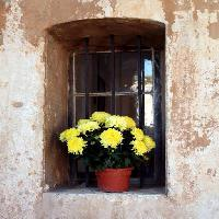 Pixwords The image with flowers, flower, window, yellow, wall Elifranssens