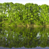 Pixwords The image with tree, trees, water, green, lake Vadim Yerofeyev - Dreamstime