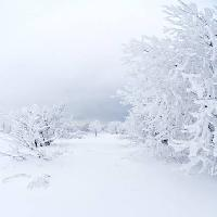 Pixwords The image with winter, white, tree Kutt Niinepuu - Dreamstime