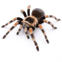 Pixwords The image with animal, bug, spider, feet Okea - Dreamstime