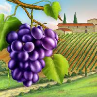 Pixwords The image with grapes, yard, green, leaf, vine, farm Andreus - Dreamstime